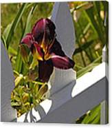 Day Lily And White Fence II Canvas Print