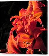 Day Lily Flame Canvas Print