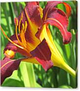Day Lily Red And Yellow Canvas Print
