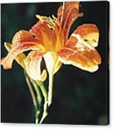 Daylily After The Rain Canvas Print