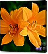 Daylily Duo Canvas Print