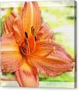 Daylily Greeting Dard Blank Canvas Print