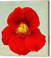 Daylily On Texture Canvas Print