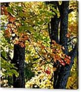 Dazzling Days Of Autumn Canvas Print