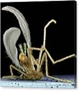 Dead Fly From Car Headlamp, Sem Canvas Print