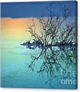 Dead Sea - Withered Bush At Dawn Canvas Print