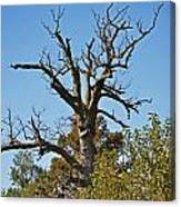 Dead Tree Canvas Print