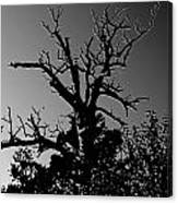 Dead Tree II Canvas Print