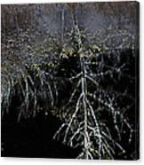 Dead Tree Reflects In Black Water Canvas Print