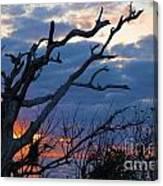 Dead Trees At Sunrise Canvas Print