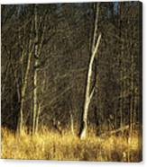 Deadwood Napanee Canvas Print