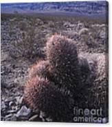 Death Valley Cactus Canvas Print