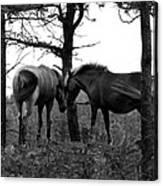 Debbie's Horses Canvas Print