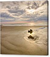 Debris On The Beach - Hunting Island Sc Canvas Print
