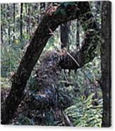 Decaying Tree Canvas Print