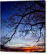 December White Oak Sunrise Canvas Print