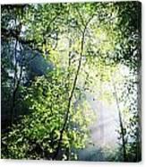 Deciduous Wood, Killarney National Canvas Print