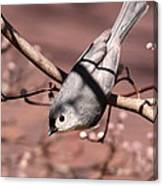 Decked Out - Tufted Titmouse Canvas Print