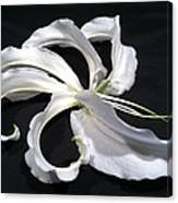 Deconstructed Lily Canvas Print