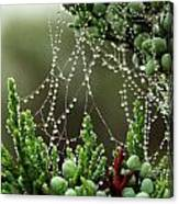 Decorated Bush Quogue Wildlife Preserve Canvas Print