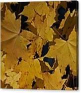 Deep Leaves Canvas Print