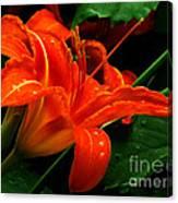 Deep Orange Day Lily Canvas Print