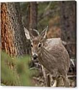 Deer 1660 Canvas Print
