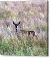 Deer Colors Canvas Print