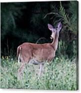 Deer - Doe - I Heard Something Canvas Print