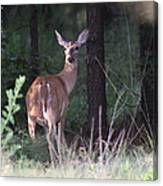 Deer - Doe - Nearing The Edge Canvas Print