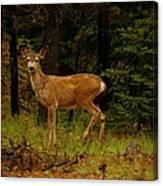 Deer Gazing  Canvas Print