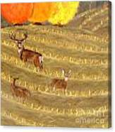 Deer In Field Canvas Print