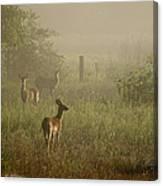 Deer In Foggy Field Canvas Print