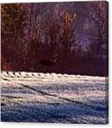 Deer In The Distance Canvas Print