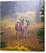 Deer In The Fog In Paradise Park In Mt Canvas Print