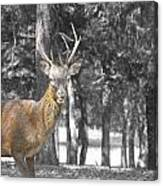 Deer In The Forest  Canvas Print
