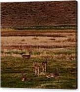Deer In The Golden Meadow Canvas Print
