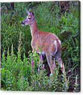 Deer In The Marsh Canvas Print