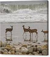 Deer On Beach Canvas Print