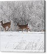 Deer Parade Canvas Print