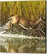 Deer Running Through The Salt Marsh Canvas Print
