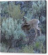 Deer Scratching Itch Canvas Print