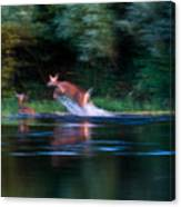 Deer Splash Canvas Print