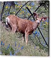 Deer Standing In Wildflowers Canvas Print