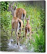 Deer Running In Stream Canvas Print