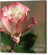 Delany Sister Rose Canvas Print