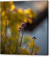 Delicate Bursts Of Purple Canvas Print