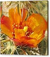 Delicate Cactus Flower Canvas Print