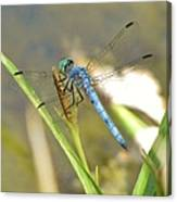 Delicate Dragonfly Canvas Print