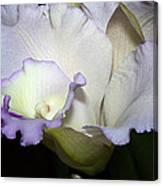 Delicate Purple Orchid Canvas Print